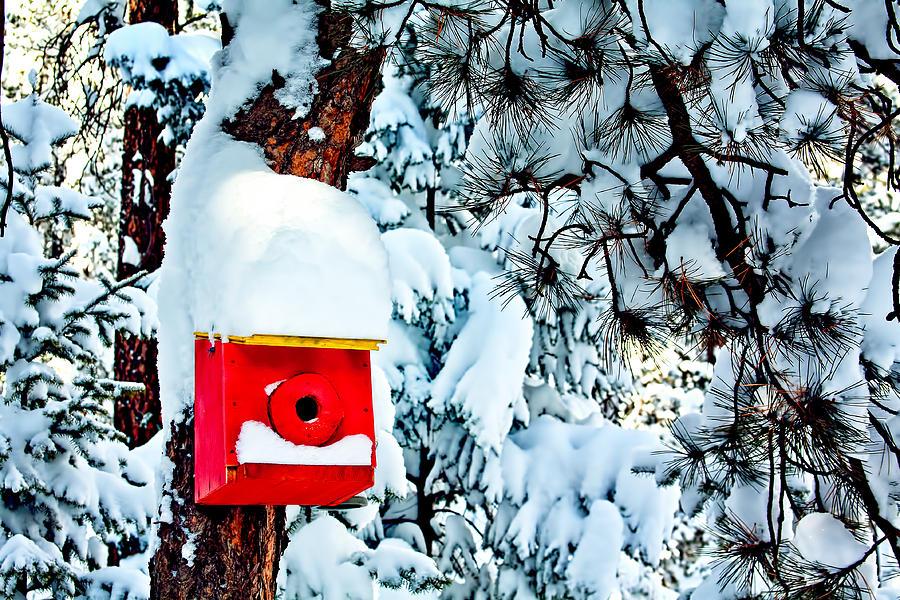 Snow Photograph - Holiday Birdhouse by Teri Virbickis