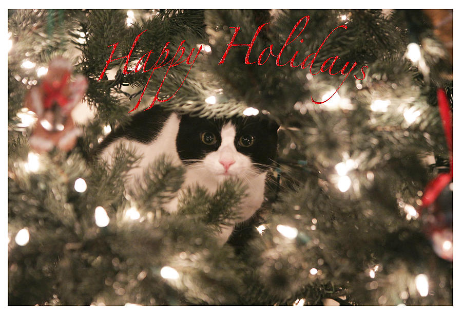Cat Photograph - Holiday Card by Shoal Hollingsworth