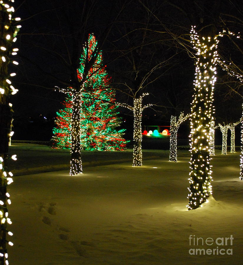 Lighting Chicago Il: Holiday Lights At Chicago Botanic Garden Photograph By