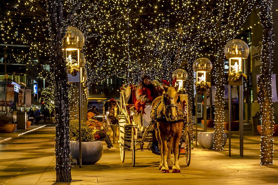 Holiday Lights Wonderland Photograph
