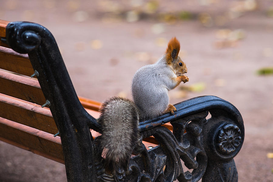 Adorable Photograph - Home Alone - Featured 3 by Alexander Senin