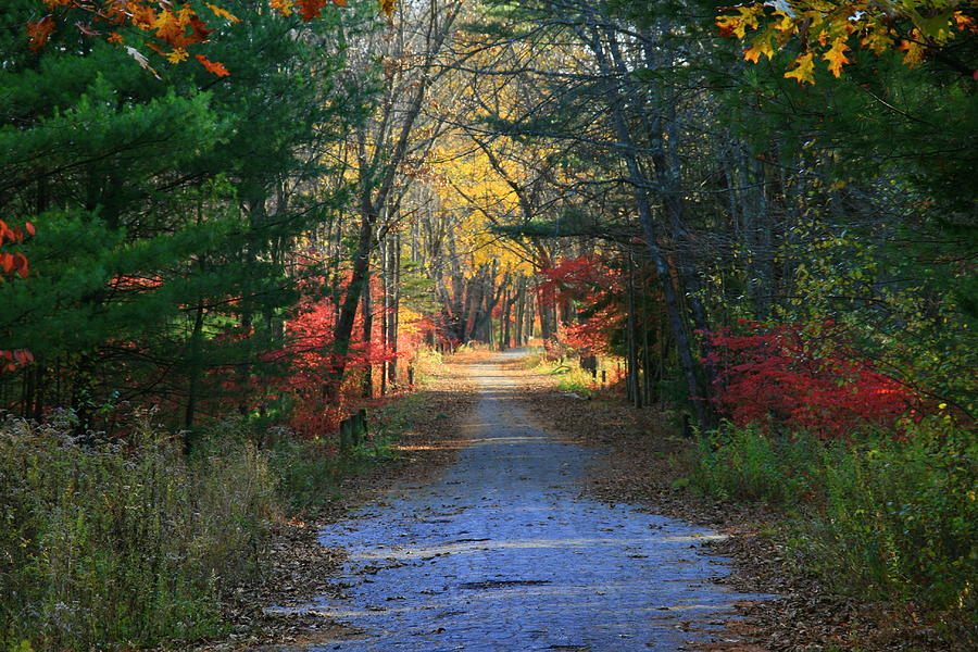 Red Leaves Photograph - Homeward Bound by Neal Eslinger