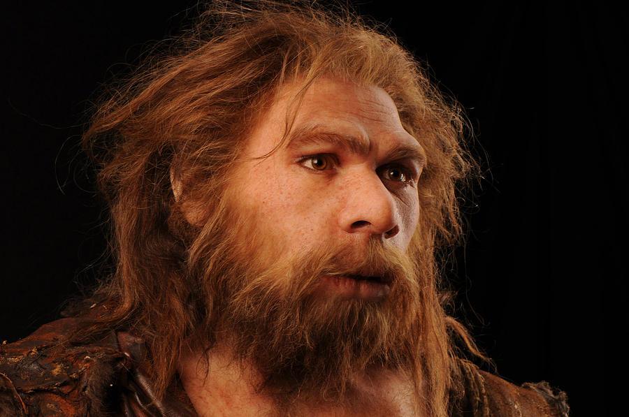 Resultado de imagen para homo neanderthalensis