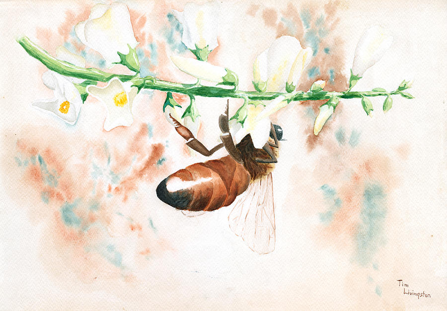 Bee Painting - Honey Bee by Timothy Livingston
