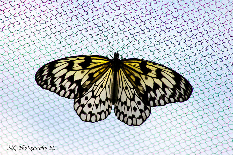 Butterfly Photograph - Honeycomb by Marty Gayler