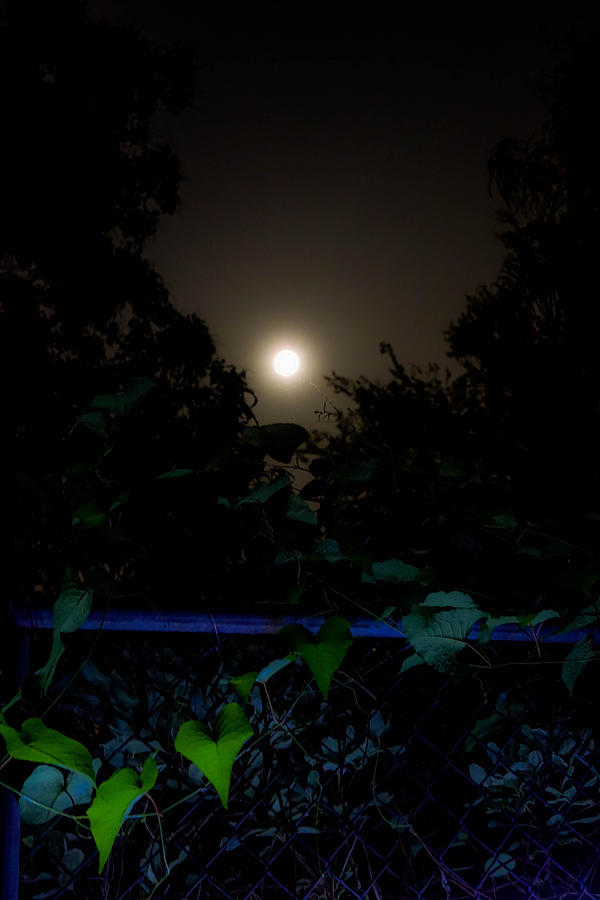 Honey Moon Photograph - Honey Moon In New Orleans On Friday The 13th by Louis Maistros