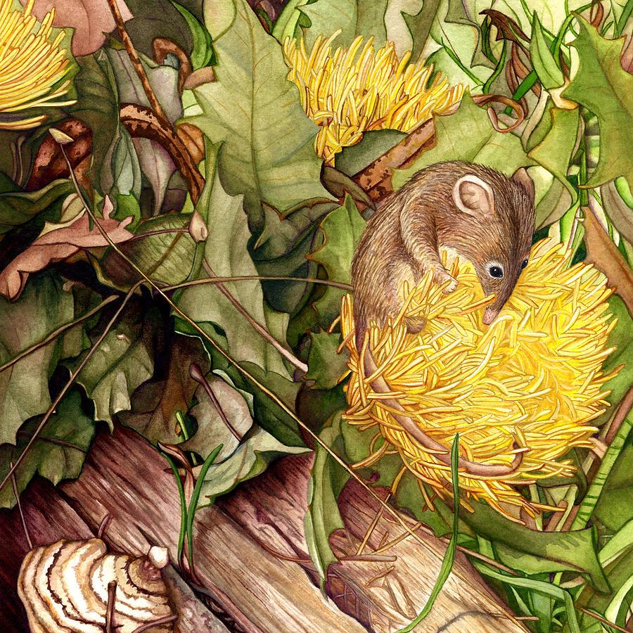 Dryandra Painting - Honey Possum in Dryandra by Suzannah Alexander