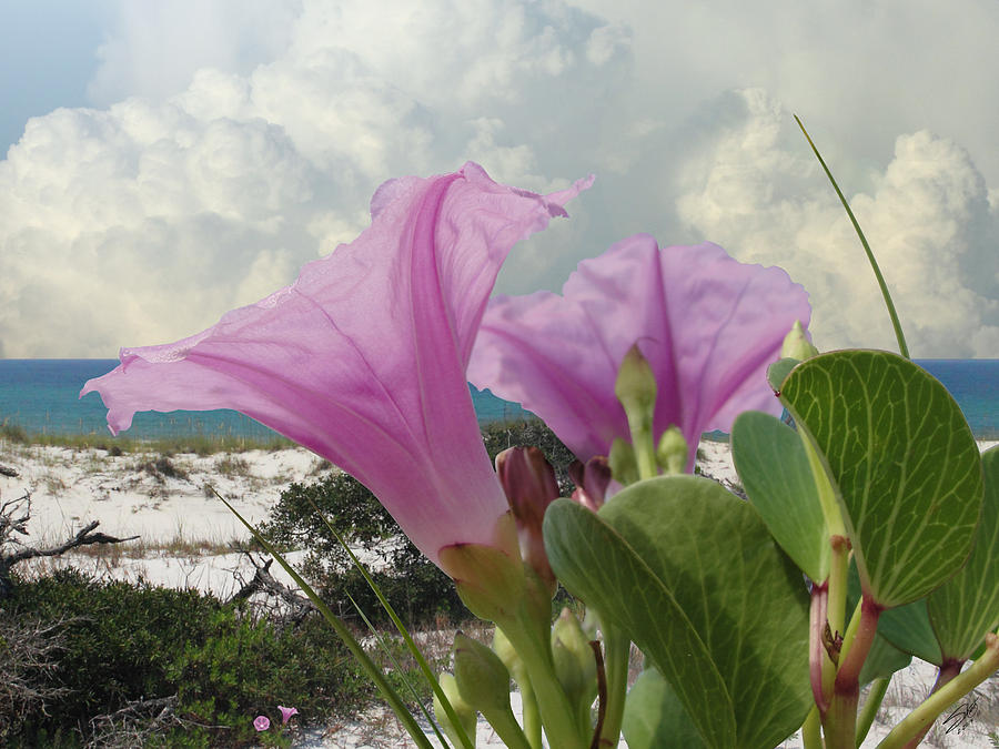 Flowers Photograph - Honeymoon Isle by M Spadecaller