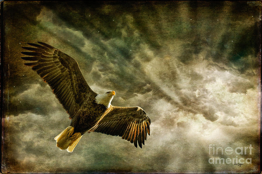 Eagle Photograph - Honor Bound In Blue by Lois Bryan