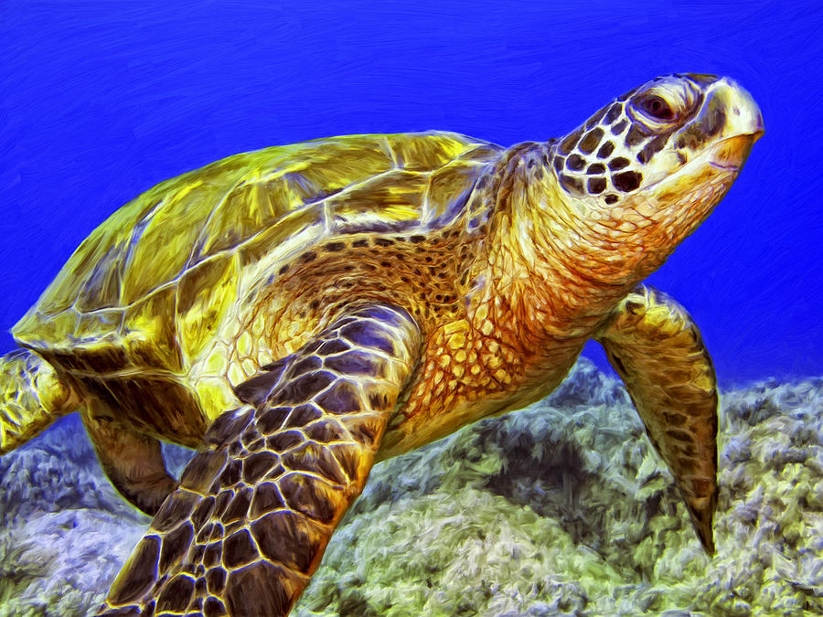 Honu Painting By Dominic Piperata