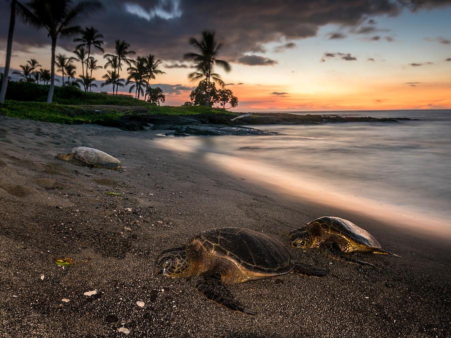 Hawaii Photograph - Honu Sunset by Robert Yone