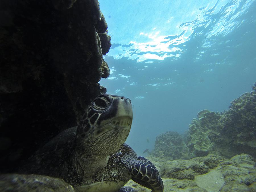 Sea Turtle Photograph - Honu Territory by Brad Scott