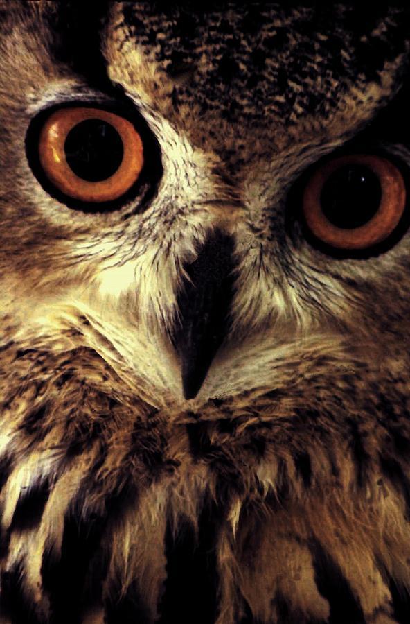 Owl Photograph - Hoot Owl by Alfredo Martinez