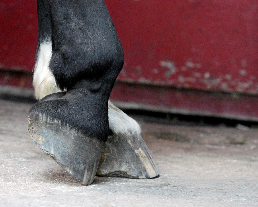 Equus Ferus Caballus Photograph - Hooves by Lisa Phillips
