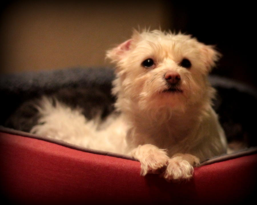 Dog Photograph - Hopeful by Michael Curry