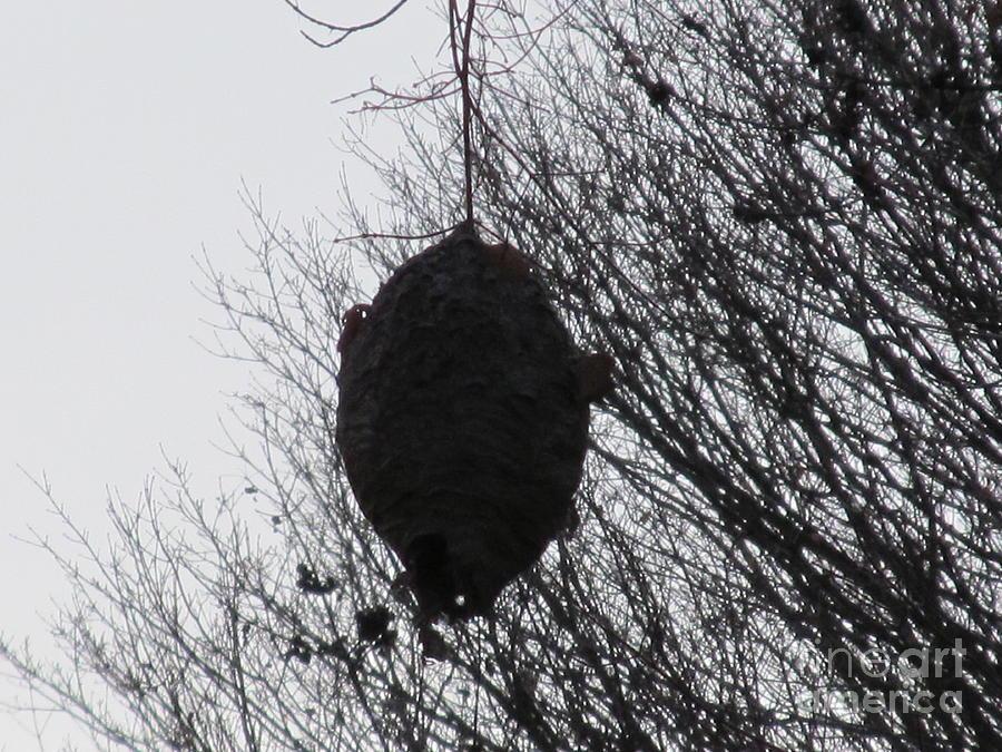Hornet Photograph - Hornets Nest West by Tina M Wenger