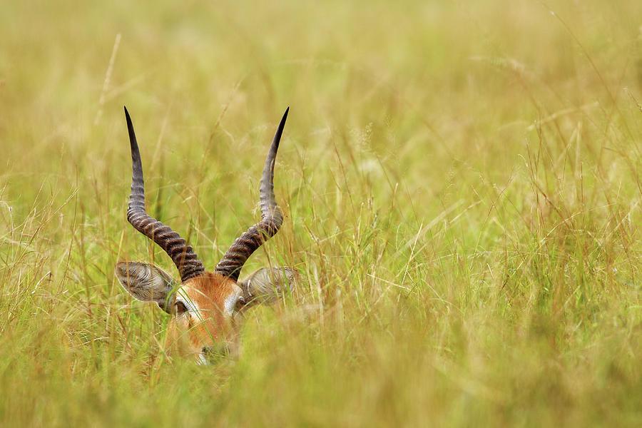 Horns Photograph by Nicolás Merino (c)
