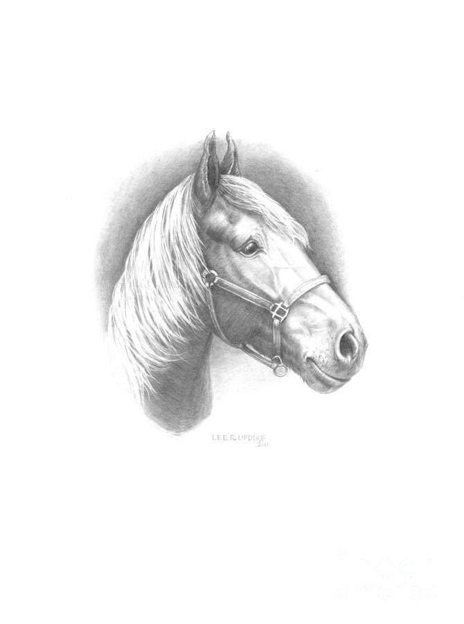 Horse Portraits Drawing - Horse-1 by Lee Updike