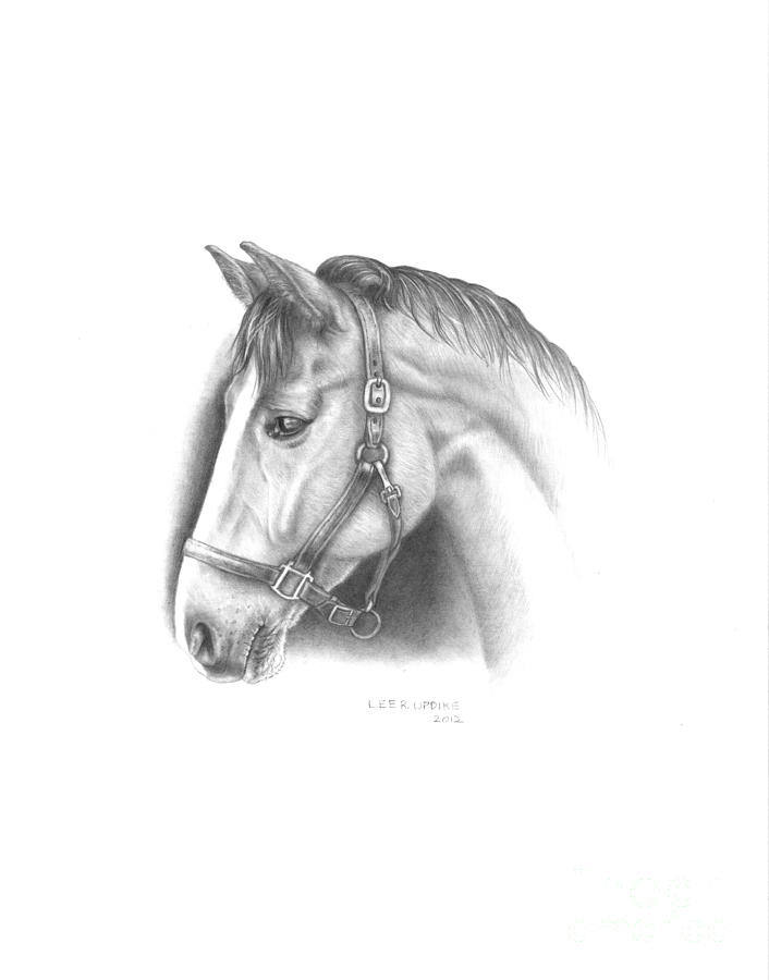 Horses Drawing - Horse-2 by Lee Updike