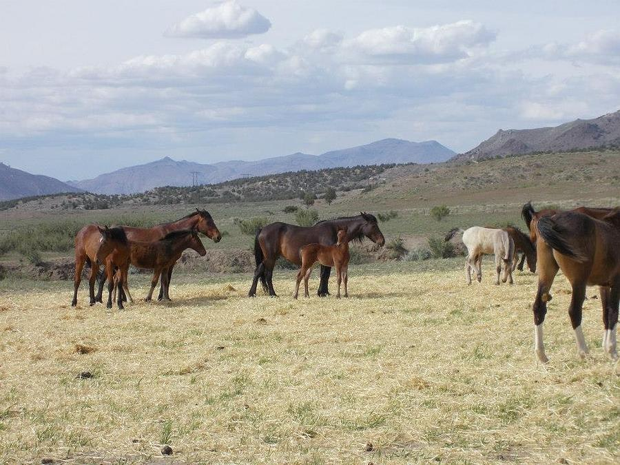 Long Lazy Day Photograph by Wynema Ranch