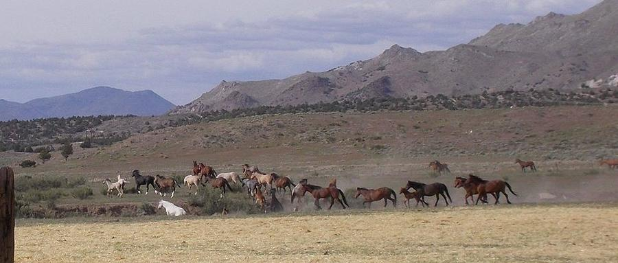 Wide Open Range Photograph by Wynema Ranch