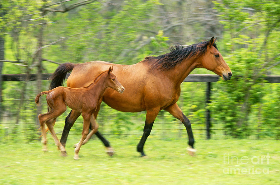 Horse And Colt Photograph By David N Davis