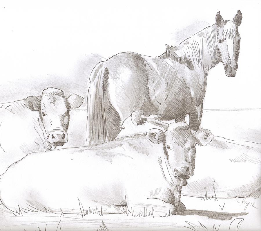 Horse And Cows Sketch