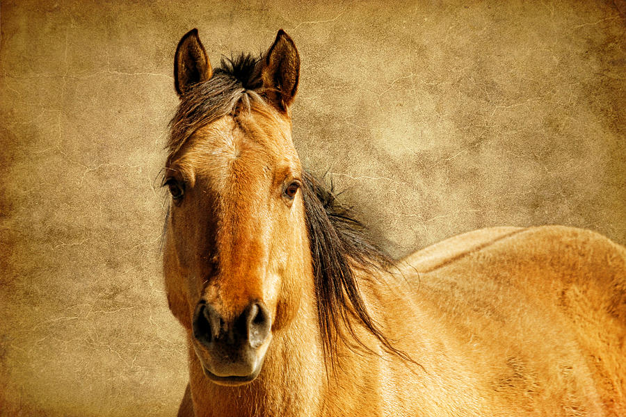 Horse And Leather Photograph