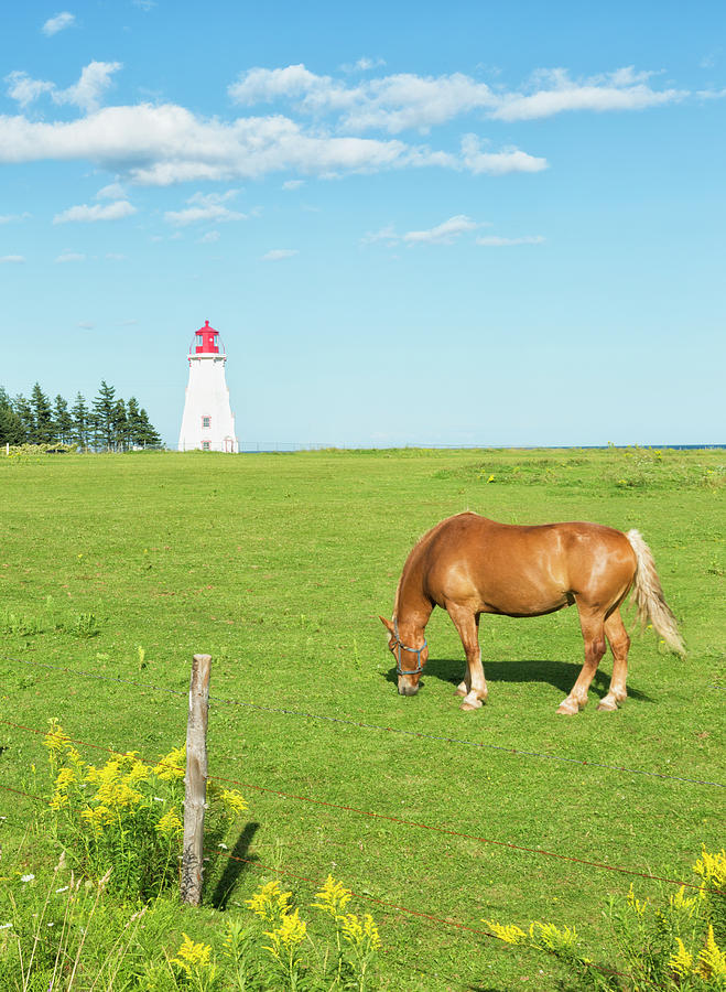 Horse And Lighthouse Photograph by Elisabeth Pollaert Smith