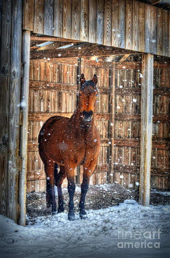 Horse Photograph - Horse And Snow Storm by Dan Friend