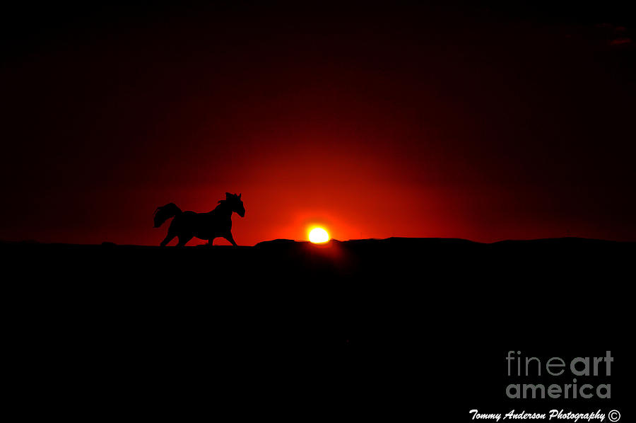 Horse Photograph - Horse And Sunset by Tommy Anderson