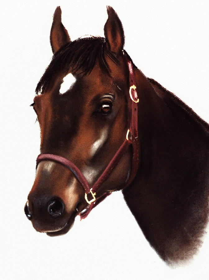 horse by Barbara Gulotta