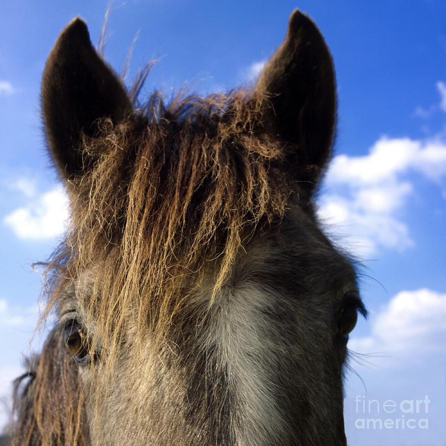 Outdoors Photograph - Horse by Bernard Jaubert