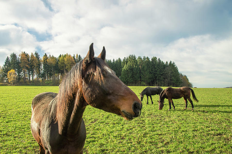 Horse Close Up Photograph by Stockimages at