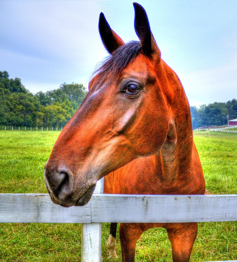 Horse Photograph - Horse Closeup by Jonny D