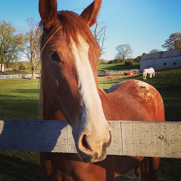 Cute Photograph - #horse #country #girl #farm #awesome by Amber Campanaro