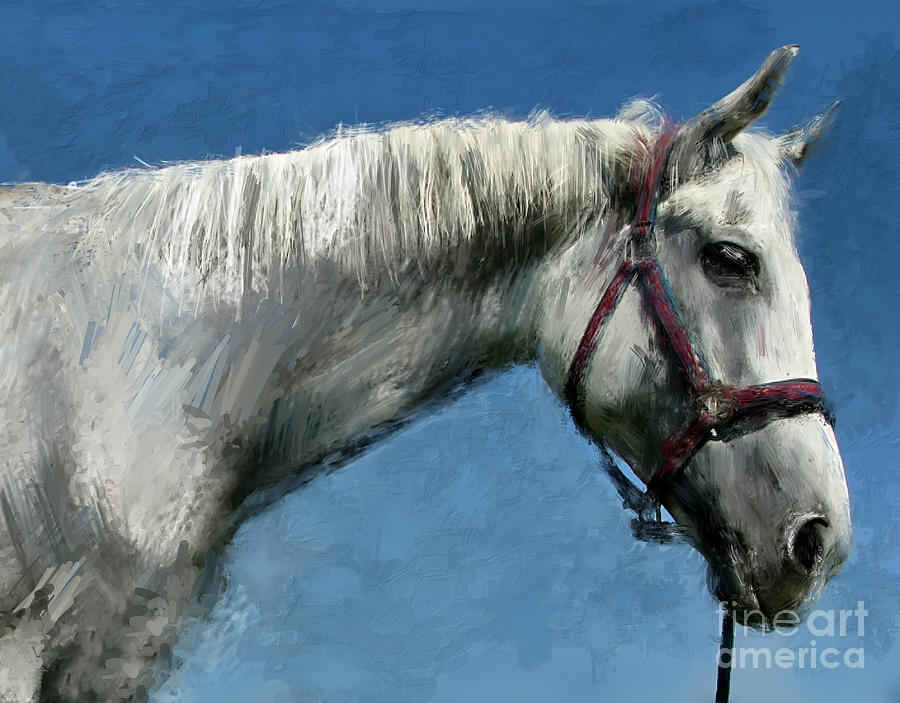 Horse Digital Painting Print Canvas Painting - Horse  by Daliana Pacuraru