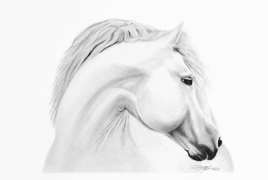 Horse Drawing - Horse by Don Medina