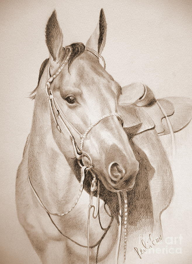 Horse Drawing - Horse Drawing by Eleonora Perlic