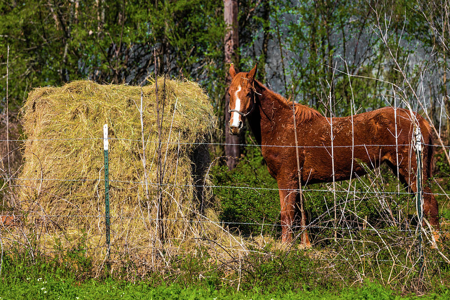Horizontal Photograph - Horse Eating Hay In Eastern Texas by Panoramic Images