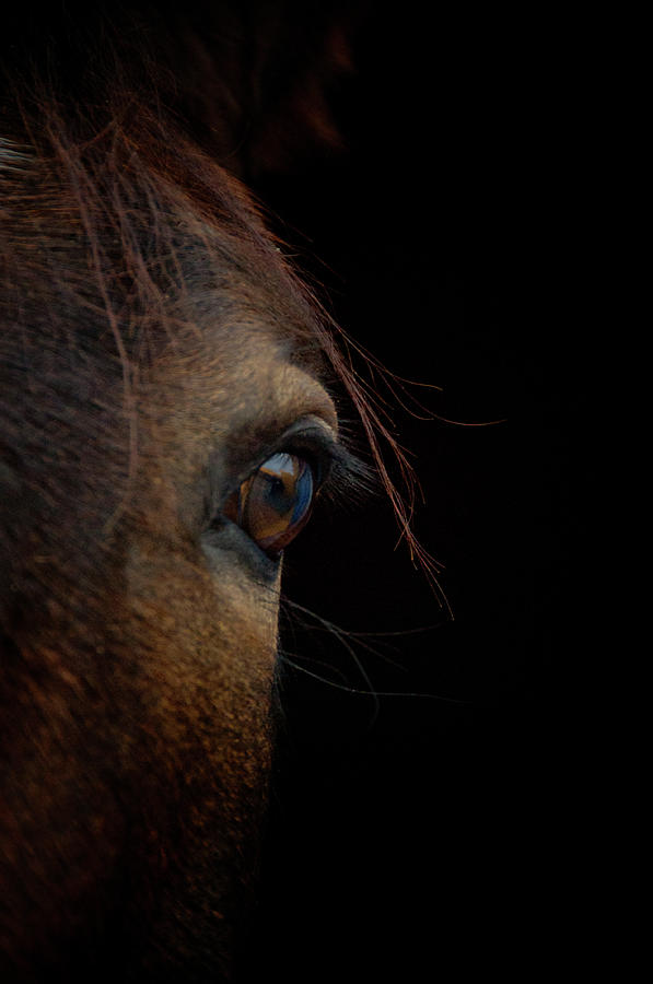 Horse Eye Photograph by By Ana Gassent