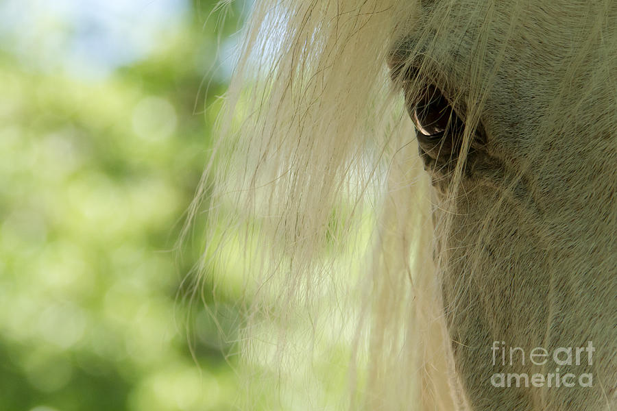 Horse Photograph - Horse Eye by Christine Sponchia