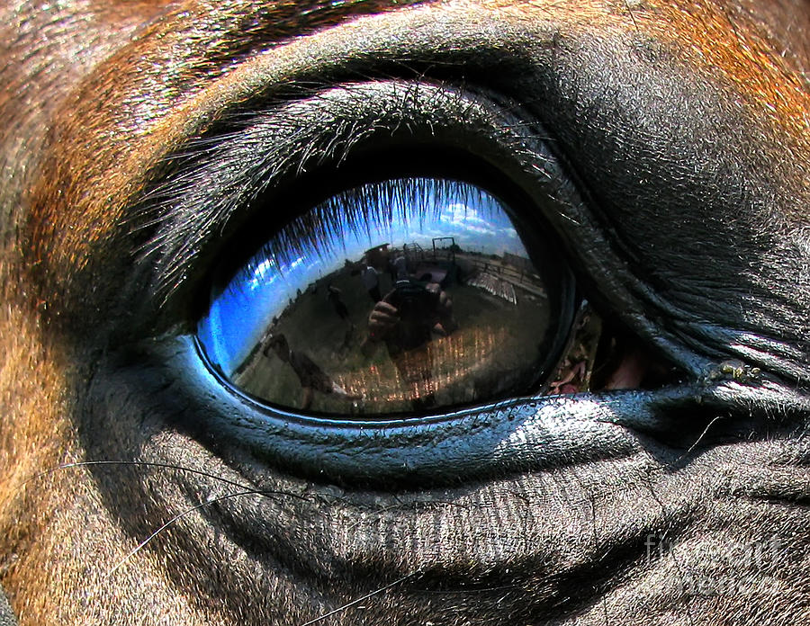 Horse Eye Photograph by Daliana Pacuraru