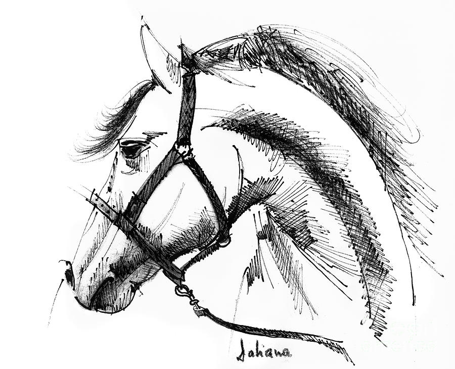 Horse Drawing Drawing - Horse Face Ink Sketch Drawing by Daliana Pacuraru