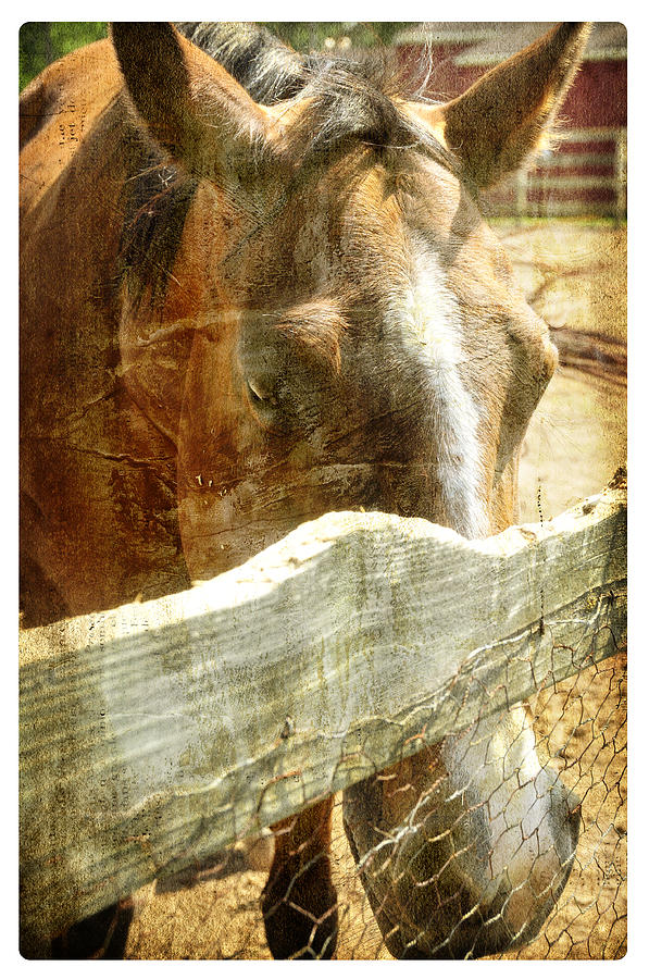 Horse Farm Photograph
