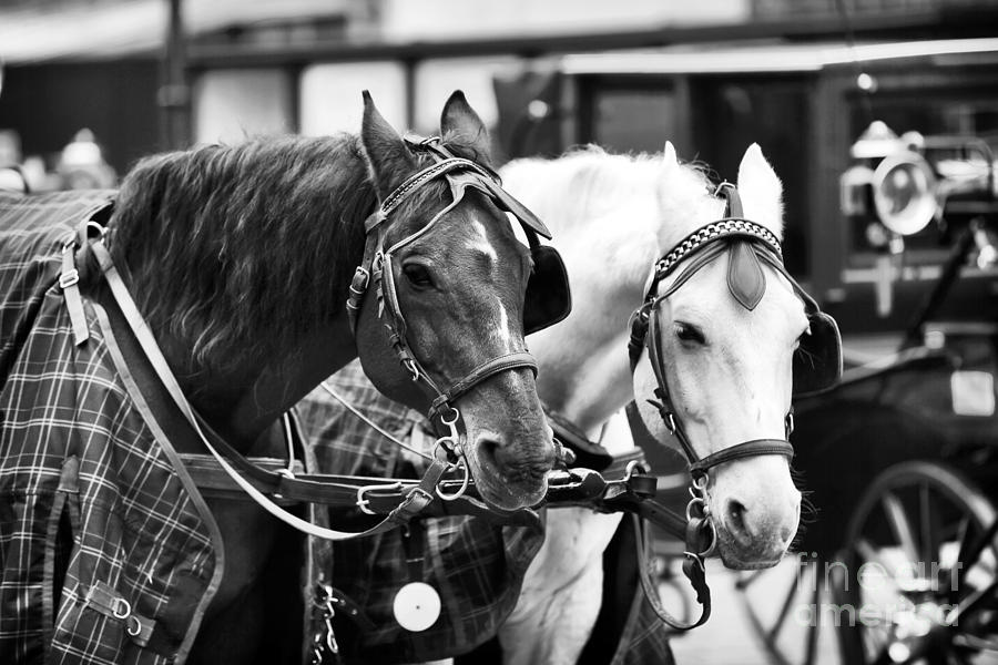 Horse Friends Photograph - Horse Friends by John Rizzuto