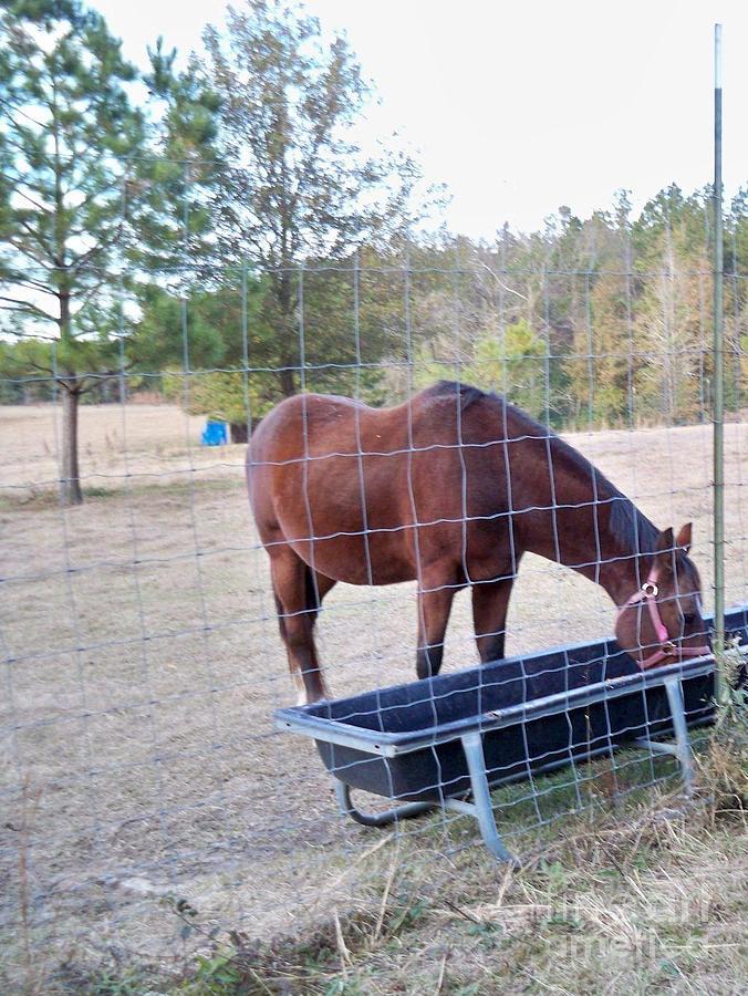 Artistic Photograph - Horse Grazing by Joseph Baril