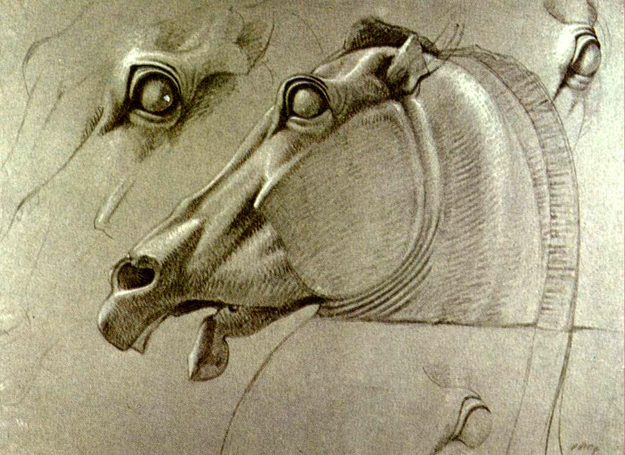 Horse Head Sketch Drawing by