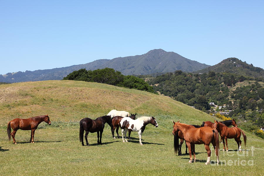 Marin Photograph - Horse Hill Mill Valley California 5d22672 by Wingsdomain Art and Photography