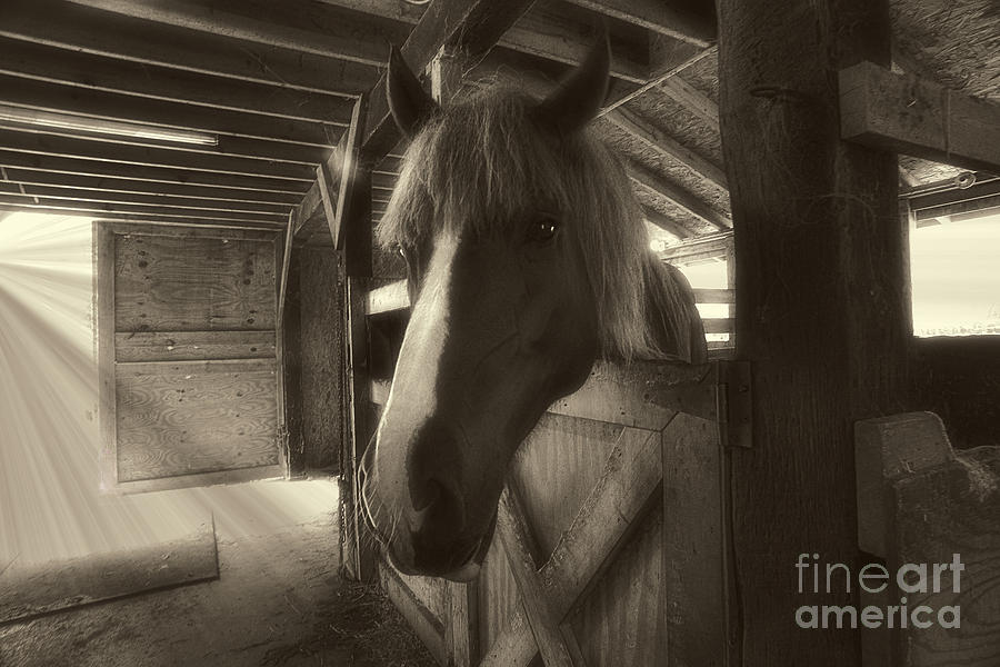 Horse Photograph - Horse In Barn Stall by Dan Friend